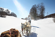 Reportage promenade avec des chiens traineau avec Nicolas Gosset, l attitude nord, février 2012