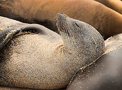 Any time of day is a good time for a seal nap.