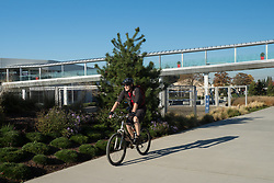 North America, United States, Washington, Kirkland. A man rides a mountain bike along the Cross Kirkland Corridor, a former railroad line converted to a trail for walking and bicycling, through Google's corporate campus.  MR
