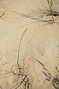 Grass and sand detail, sand dunes, Nida, Lithuania