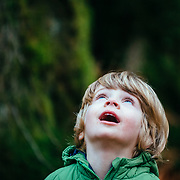 A young boy with blue eyes looks up to the forest canopy in Bellingham, Washington.