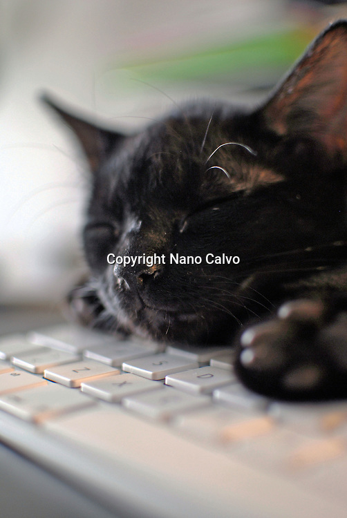 Cute black cat resting on keyboard
