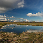 In the Spring, Vernal Pools form on top of Lower Table Rock, which is one of two prominent volcanic plateaus located just north of the Rogue River in Jackson County, Oregon. Shaped by erosion, they now stand about 800 feet (240 m) above the surrounding Rogue Valley
