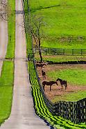 Kentucky-Lexington-Horse Farms