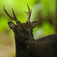 Mammals of Philippines