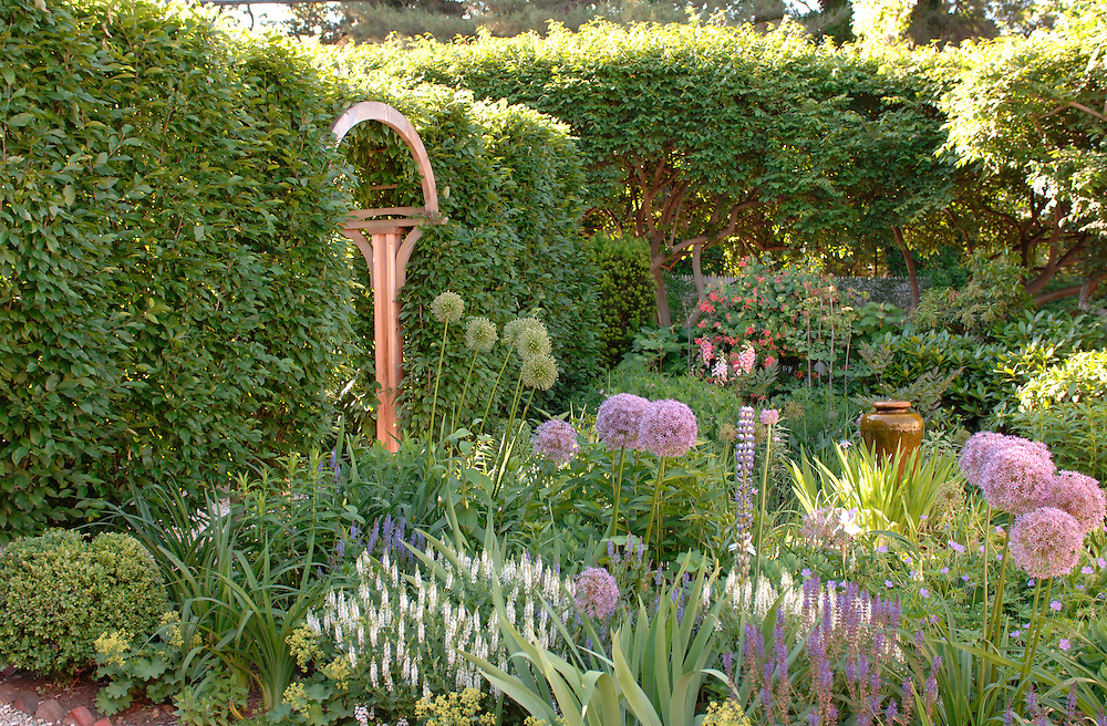 Ligustrum Hedge
