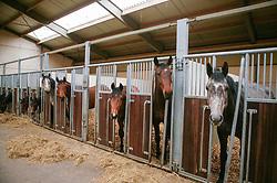 Groepsstalling jonge paarden<br /> Photo © Hippo Foto