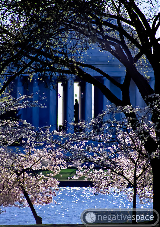 Cherry blossoms and the Thomas Jefferson Memorial at the Tidal Basin, Washington, DC