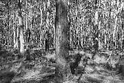 Forest in Jervis Bay National Park