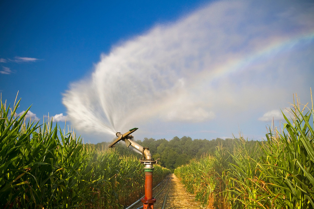 Water from an irrigation canon follows it around as it waters a cornfield on a Missouri farm on a hot summer evening.