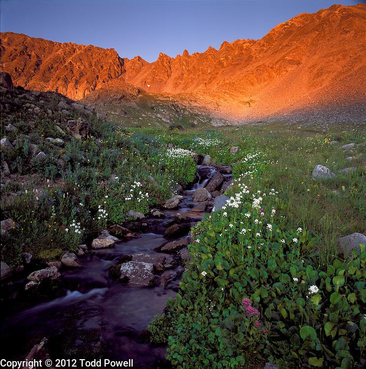 Wildflowers & Creek. Mayflower Gulch & Ten Mile Mountain Range, Summit County, Colorado