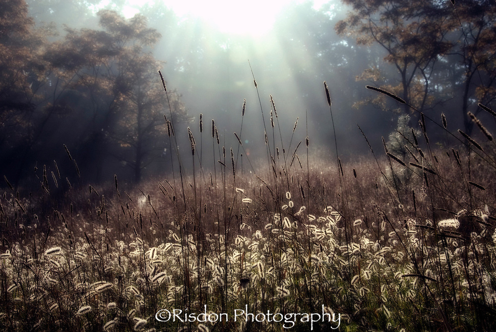Field with fog and sunbeams