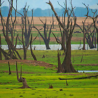 Alberto Carrera, Waterland, Dry Drowned Trees, Udawalawe National Park, Sri Lanka, Asia