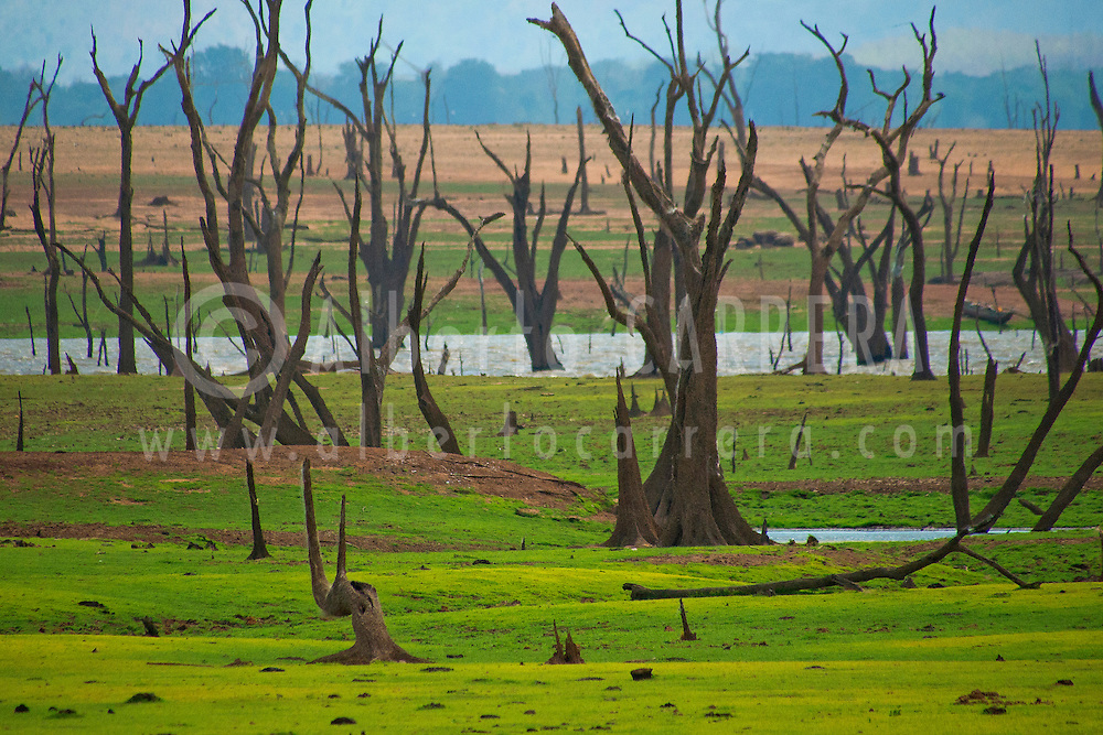 Alberto Carrera, Waterland, Dry Drowned Trees, Udawalawe National Park, Sri Lanka, Asia
