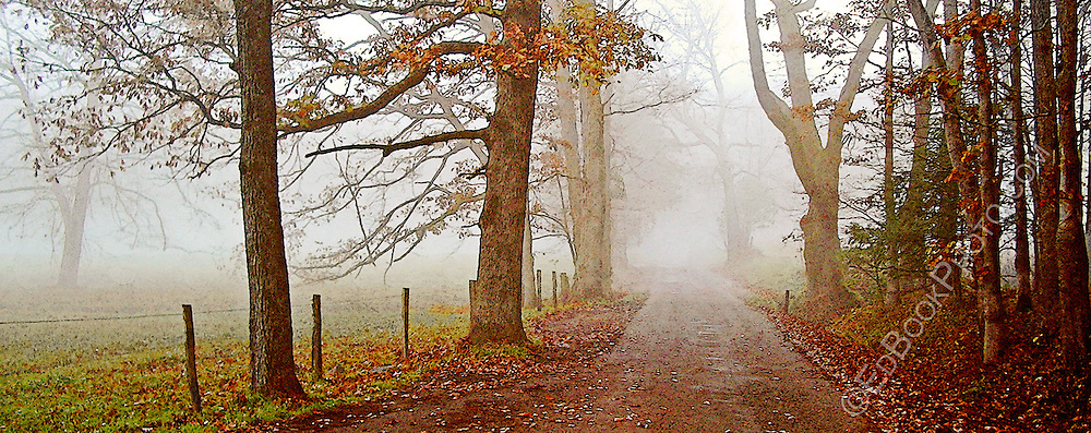 digital painting from a photographic original of 'early morning foggy lane in Cade's Cove - Great Smokey Mountains National Park, Tennessee, USA