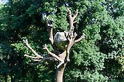 """Penone Baum """"Idee di Pietra"""" von Guiseppe Penone, Karlsaue, Kassel, Hessen, Deutschland"""