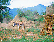 """A saddled and packed burro waits patiently by an adobe wall next to a dirt path in the mountains of Central Mexico. NOTE: Click """"Shopping Cart"""" icon for available sizes and prices. If a """"Purchase this image"""" screen opens, click arrow on it. Doing so does not constitute making a purchase. To purchase, additional steps are required."""