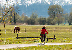 THEMENBILD - eine Radfahrerin fährt an einem Pferd auf einer Wiese vorbei aufgenommen am 29. April 2017, Thumersbach, Österreich // A cyclist drives past a horse on a meadow at Thumersbach, Austria 2017/04/29. EXPA Pictures © 2017, PhotoCredit: EXPA/ JFK