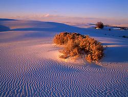 220 White Sands Burning Bush