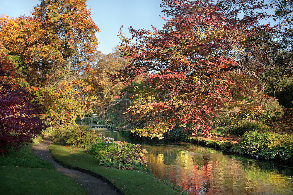 Ornamental trees with autumn colour by the River Vartry at Mount Usher, County Wicklow, Ireland.<br />