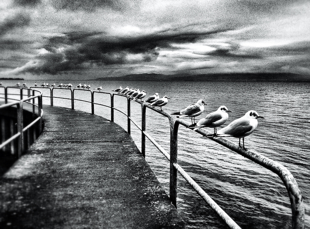 Seagulls. Bodensee, Germany. Photo: Miroslav Dakov