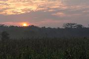 Sunrise in a cornfield in Francia Nueva, Chicontepec, Veracruz. / Amanecer en una milpa.
