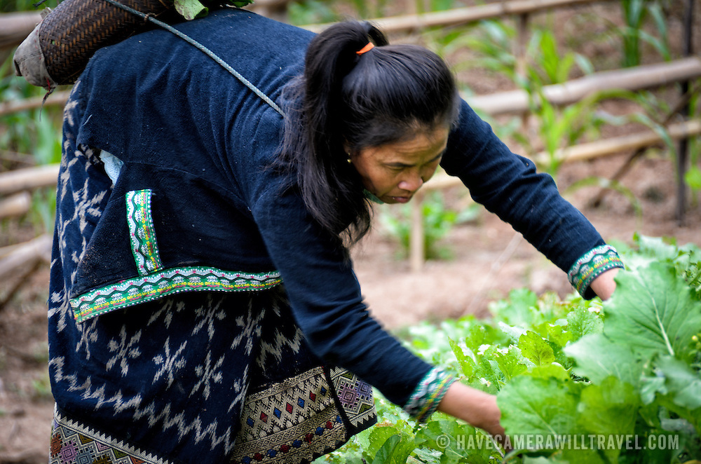 A woman doing the backbreaking work of tending to her small crop of vegetables on the banks of the Nam Ou (River Ou) in Nong Khiaw in northern Laos. When the rainy season comes, the swelling of the river will put this small farm under water.