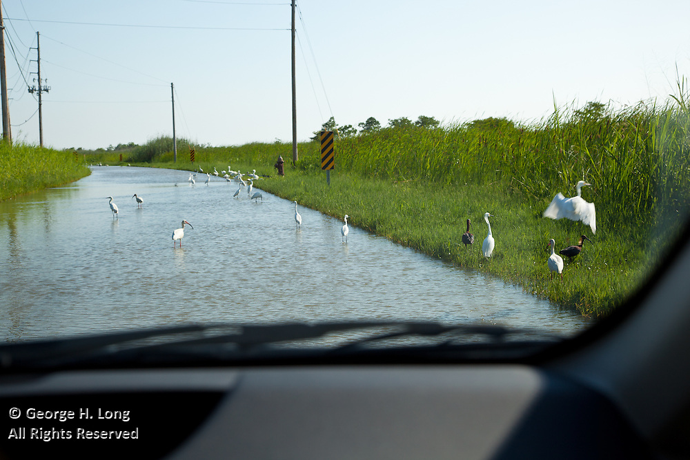 Along south Louisiana's Highway 23