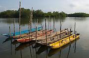 Dug out canoes at mooring in Mangrove Estuary<br /> Puerto Jeli<br /> Guayas Peninsula<br /> Coast of ECUADOR.  South America