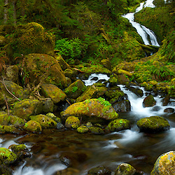 Panorama of Bunch Falls in Olympic National Park near Lake Quinault, WA.