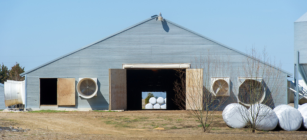 Chicken house with doors open showing white bales in Hurlock, MD