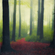 Dreamy forest scene in late october