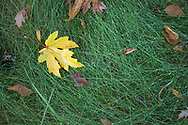 Early morning dew on grass and autumn leaves