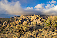 The weather changed quickly on this windy morning in Mojave National Preserve. It looked like it was going to stay sunny for awhile. But then the clouds descended and obscured the Granite Mountains.<br />