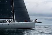 Elvis sailing at the start of the Newport Bermuda Race.