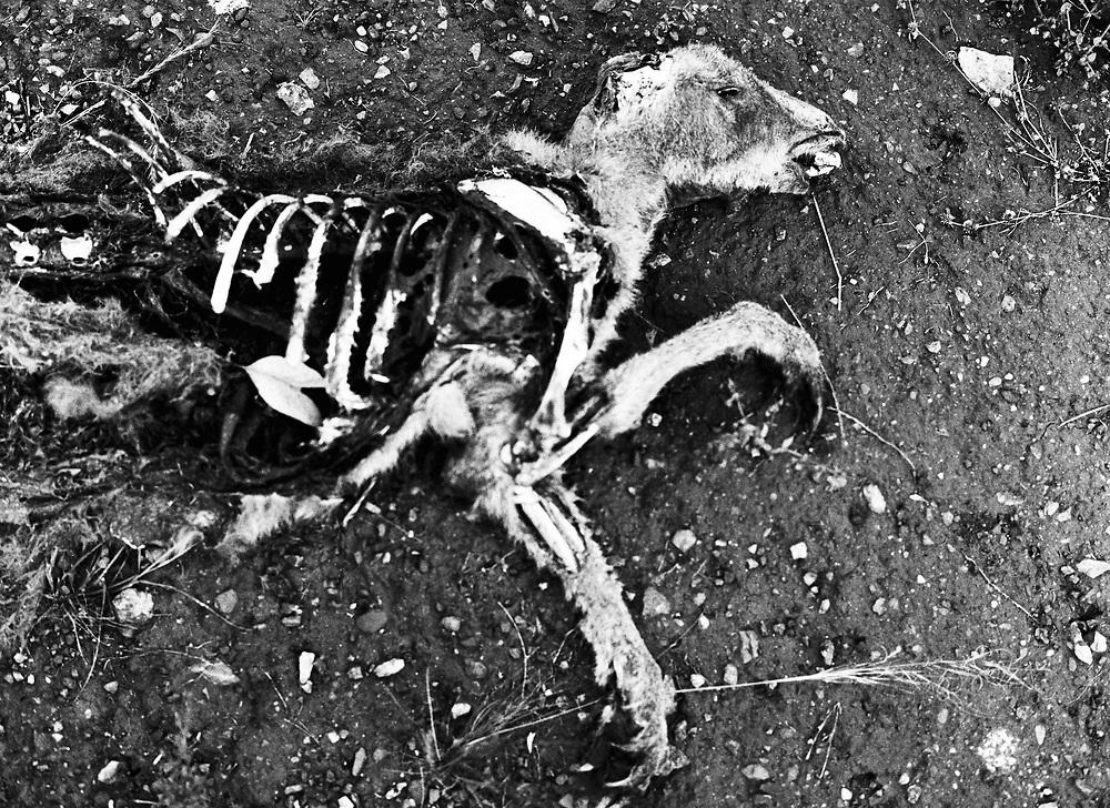 Kangaroo carcass outside Parkes, NSW