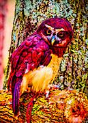 Pop Art rendering of a Spectacled Owl named Estrella at the Carolina Raptor Center in Charlotte, North Carolinag