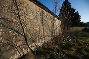 shadows of young trees on an old wall