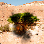 Digitally enhanced image of a Biblical burning Bush (Book of Exodus[3:1–4:17]) in the desert