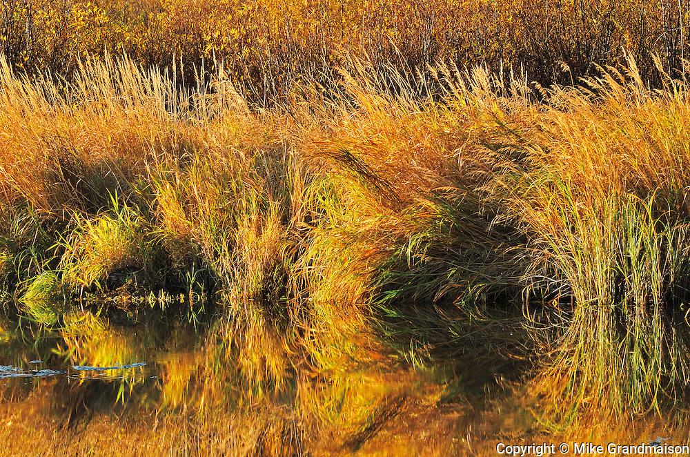 Reflection of grasses along Sppuce River  in autumn<br /> Prince Albert National Park<br /> Saskatchewan<br /> Canada