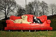 """Oversized couch with a dog and cat sitting on. This couch is the logo and symbol of the kennel in Brokenlande. The owner Jens van Yperen took over the dog hotel from his father in 1998. The family business exists since 1976. He is trained zookeeper and dog trainer and grew up with animals. One of his statements: """"A dog is not a child replacement, rather it is a prince, a little king."""" Brokenlande, Germany / Ueberdimensionierte Couch auf der Hund und Katze sitzen. Diese Couch ist Logo und Symbol des Hundehotels in Brokenlande. Der Besitzer Jens van Yperen hat 1998 das Hundehotel von seinem Vater uebernommen. Dieser Familienbetrieb besteht sein 1976. Er ist gelernter Tierpfleger und Hundetrainer und mit Tieren aufgewachsen. Eines seiner Statements: """"Ein Hund ist kein Kindersatz, er ist vielmehr ein Prinz, ein kleiner Koenig"""". Brokenlande, Deutschland"""