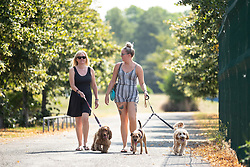 July 26, 2018 - Manchester, Greater Manchester, UK - Manchester , UK . Two women walk three dogs in Chimney Pot Park in Salford . People enjoy the summer sunshine in Manchester as temperatures in the UK are forecast to break records  (Credit Image: © Joel Goodman/London News Pictures via ZUMA Wire)
