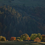 Group of trees with autumn colors in last sunlight with hills and trees in the background, France