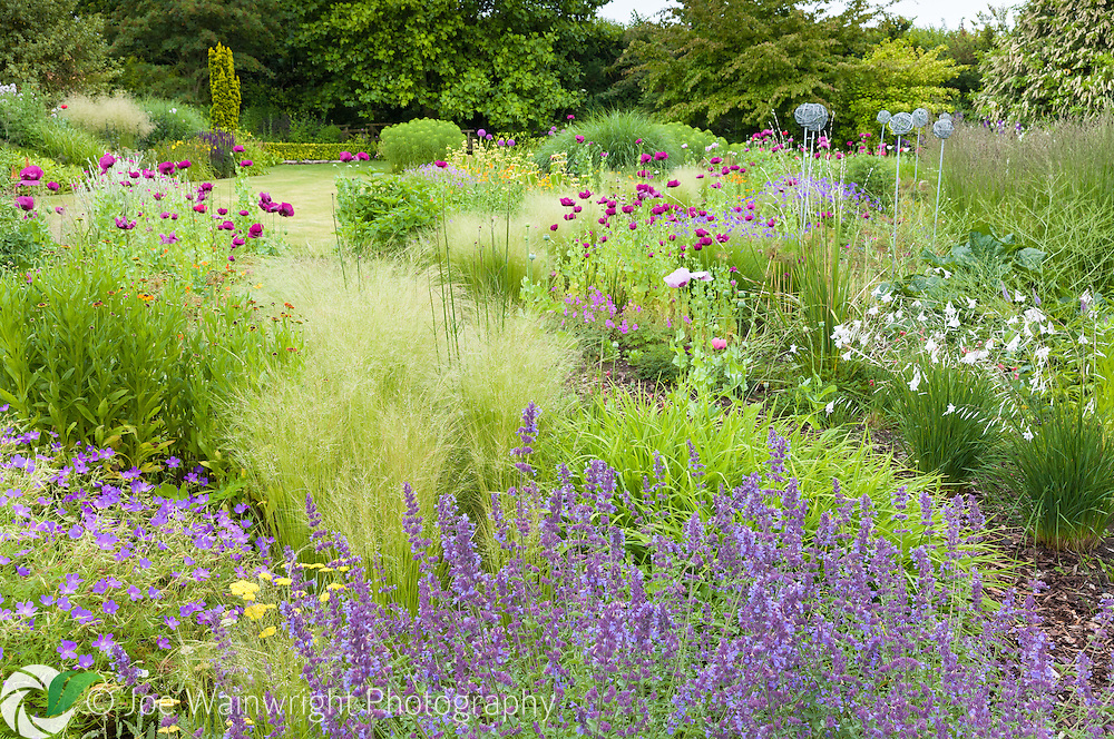 Grasses and perennials such as Nepeta, Geraniums and poppies mingle in a luish herbaceous border at Bluebell Cottage Gardens, Cheshire