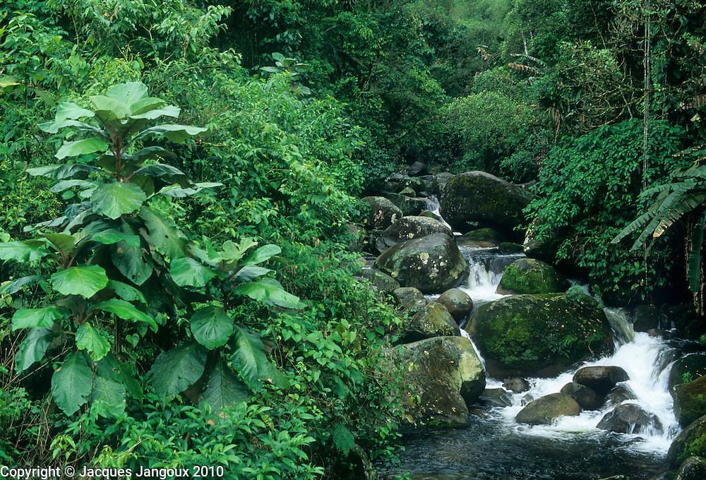 Stream in Atlantic rainforest, Serra do Mar mountain range, Rio de Janeiro State, Brazil