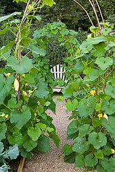 Squash arches framing wooden seat in the vegetable garden