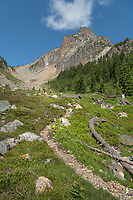 Easy Pass Trail, North Cascades Washington