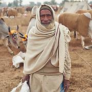 Cattlemen of Rajistan