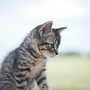 20100602 Kittens for AP