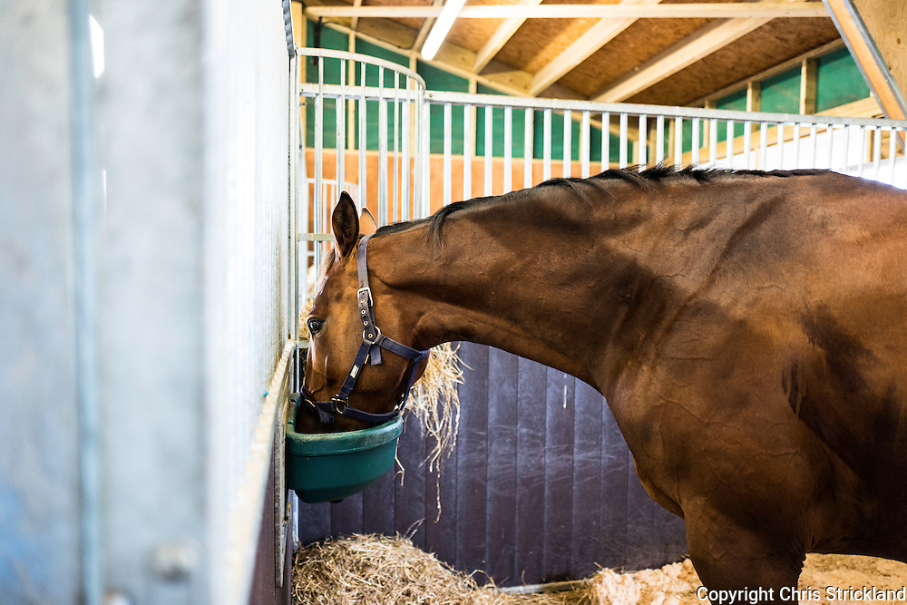 Strip End, Camptown, Jedburgh, Scottish Borders, UK. 22nd July 2016. Racehorses enjoy home comforts at the stables of Harriet Graham Racing.
